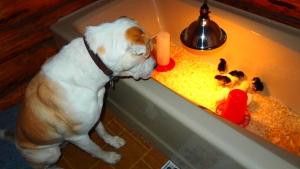 Wilbur showing self-control