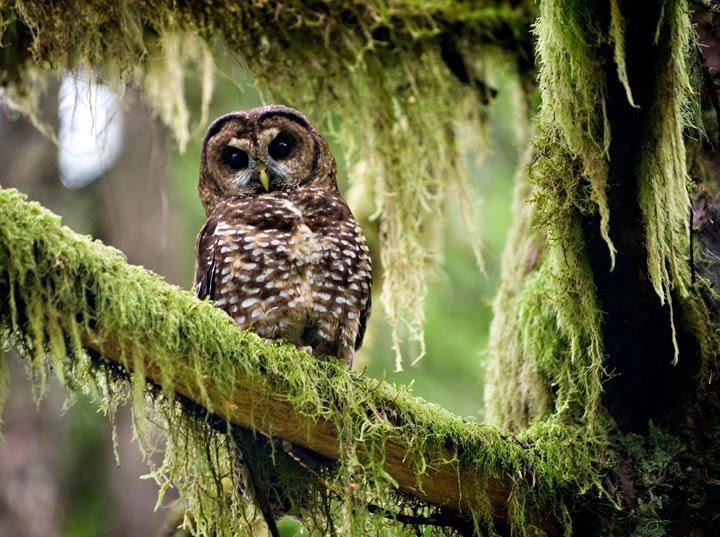 Credit Image: © Robin Loznak/robinloznak.com