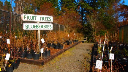 Blake's fruit trees