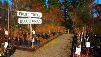 Blake's fruit trees