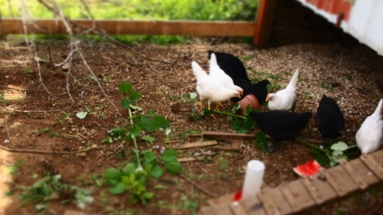 Chicks getting in on the weed bounty